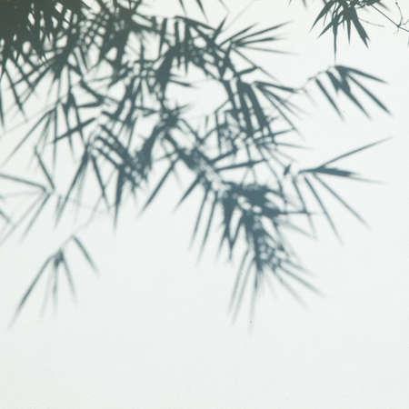 Ombra di foglie di bambù