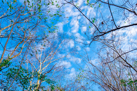 The sky is blue and tree in the forest