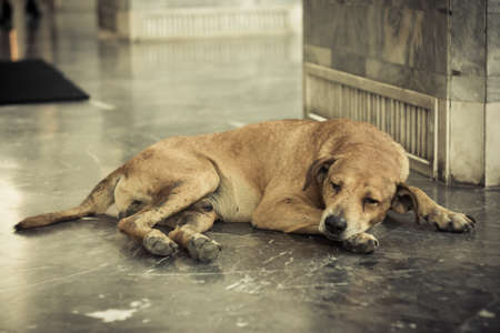 Homeless and sick dog photo