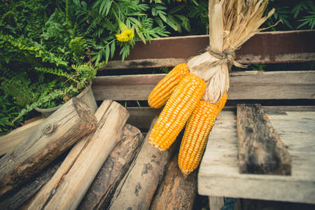 pyre: vintage  photo of Dry corn cob on wooden with pyre Stock Photo