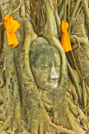 Buddha image in the tree at Wat Maha That in Ayutthaya , Thailand photo