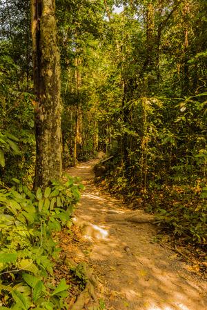 abundant: Central Street forests are abundant.