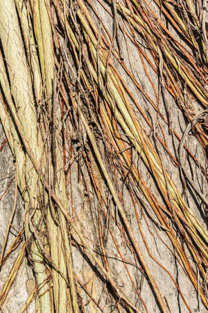 absorb: Tree roots are digested down from tree roots to absorb nutrients. Background image