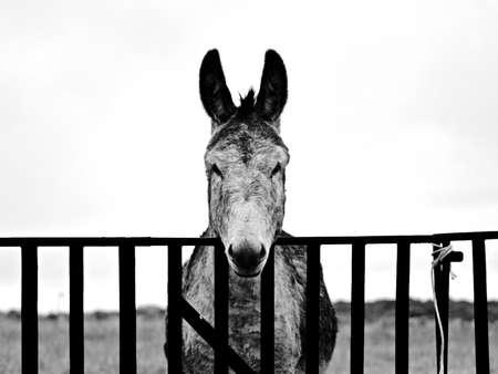 spanish village: Donkey on a spanish village in black and white