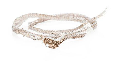 Snake shedding skin isolated on white background