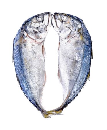 Fresh mackerel fish on white background