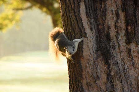 Squirrel hanging on a tree in morning