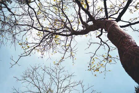 Look up view of tree and branches,blue sky Stok Fotoğraf