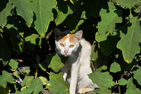 Cat hidden under leaves., Cat peeking through the undergrowth., Indain cat picture