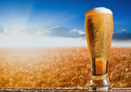A glass of beer with foam against the background of the field of wheat spikes blue sky Stockfoto