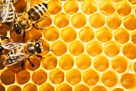 Ape del miele di un insetto di sale