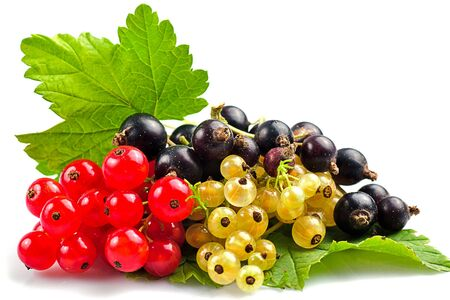 red currant black berry on a white background Imagens