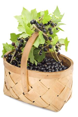 blackcurrant berry in a basket against a white background