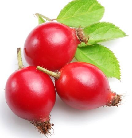 rosehip plant on a white background.
