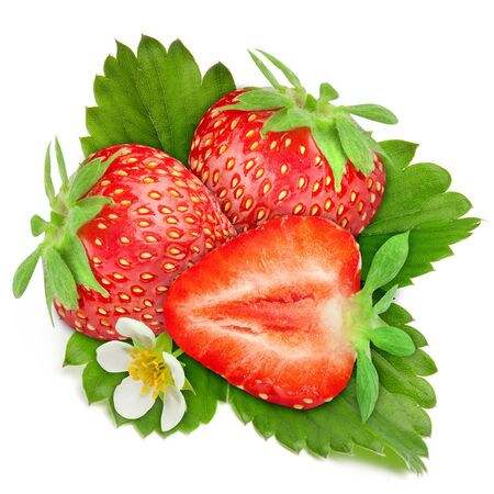 three strawberry berry leaves on a white background.