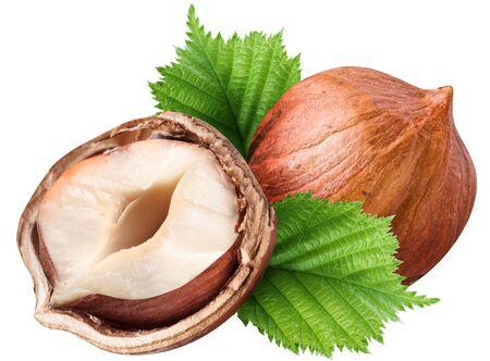 Hazelnut kernel half leaf close-up on white background.