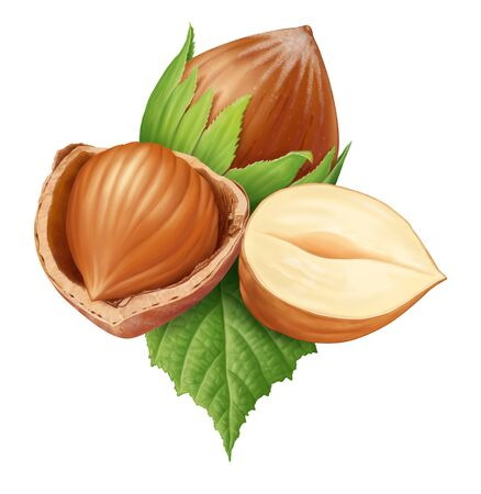Hazelnut hazelnut core white background .