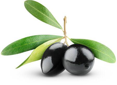 Las aceitunas son negras sobre una ramita con hojas de fondo blanco.