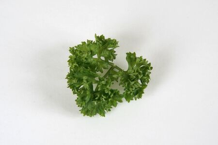 Parsley curly greens on a white background .