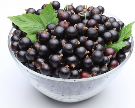 Currant black berries bowl white background .