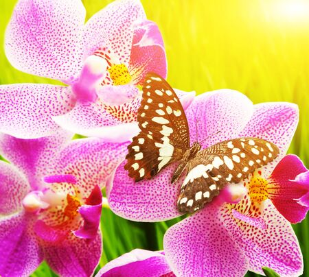 Flowers pink butterfly insect yellow background . Stock Photo