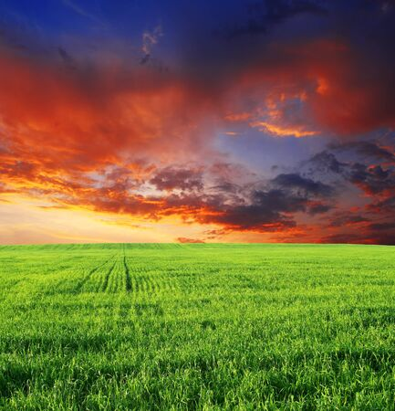 Feldgrashimmelsonnenuntergangdämmerungswolken. Standard-Bild