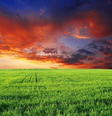 Nuvole di alba del tramonto del cielo dell'erba del campo. Archivio Fotografico