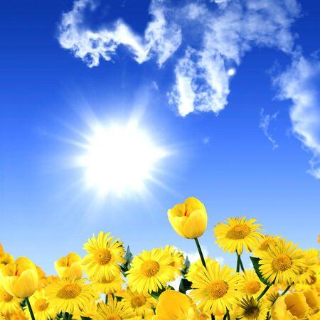 Flowers daisy yellow tulips blue sky sun .