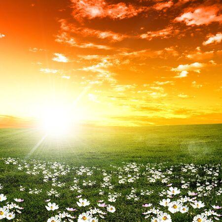 Meadow field flowers grass sun sunset sky rays .