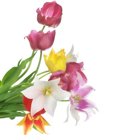 Flowers tulips bouquet buds white background .