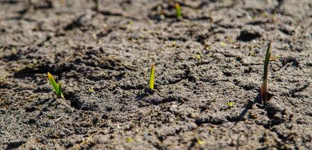 Cracked, parched land after a drought Banque d'images