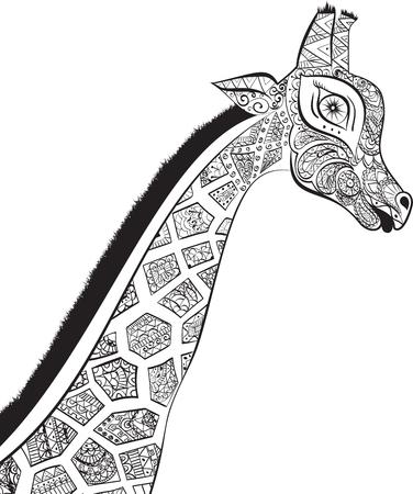 jirafa: Jirafa adulta hermosa. Dibujado a mano Ilustraci�n de jirafa. jirafa aislados sobre fondo blanco. La cabeza de una jirafa en forma