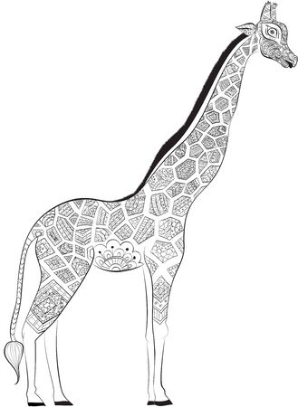 cute giraffe: Beautiful adult Giraffe. Hand drawn Illustration of giraffe.  isolated giraffe on white background. The head of a shaped giraffe