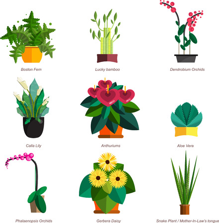 aloe vera plant: Illustration of houseplants, indoor and office plants in pot. Dracaena, fern, bamboo, spathyfyllium, orchids, Calla lily, aloe vera, gerbera, snake plant, Mother-in-law tongue, anthuriums. Flat plants, icon set