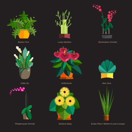 ferns and orchids: Illustration of houseplants, indoor and office plants in pot. Dracaena, fern, bamboo, spathyfyllium, orchids, Calla lily, aloe vera, gerbera, snake plant, Mother-in-law tongue, anthuriums. Flat plants, icon set