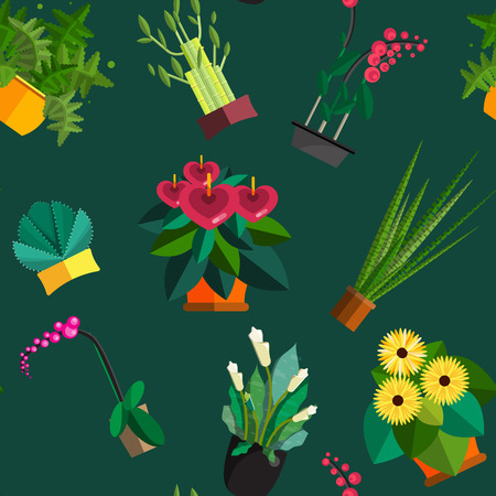 plant in pot: Illustration of houseplants, indoor and office plants in pot. Dracaena, fern, bamboo, spathyfyllium, orchids, Calla lily, aloe vera, gerbera, snake plant, Mother-in-law tongue, anthuriums. Flat plants, icon set