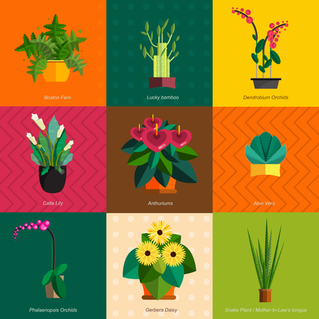 Illustration of houseplants, indoor and office plants in pot. Dracaena, fern, bamboo, spathyfyllium, orchids, Calla lily, aloe vera, gerbera, snake plant, Mother-in-law tongue, anthuriums. Flat plants, icon set
