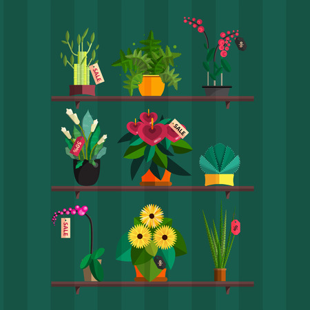 Illustration of houseplants, indoor and office plants in pot. Dracaena, fern, bamboo, spathyfyllium, orchids, Calla lily, aloe vera, gerbera, snake plant, Mother-in-law tongue, anthuriums. Flat plants shop, vector sale set. Flower shop.
