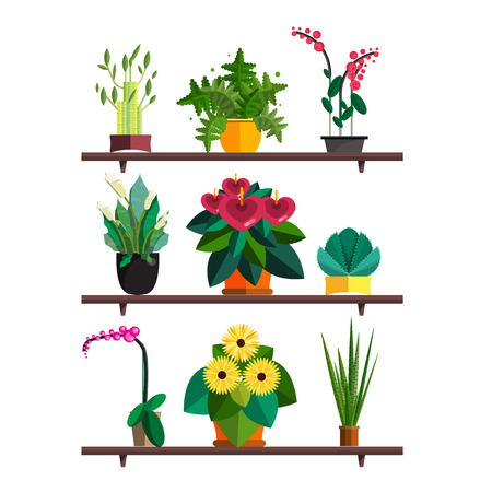 Illustration of houseplants, indoor and office plants in pot. Dracaena, fern, bamboo, spathyfyllium, orchids, Calla lily, aloe vera, gerbera, snake plant, Mother-in-law tongue, anthuriums. Flat plants pattern, vector textures set. Flower shop Illustration
