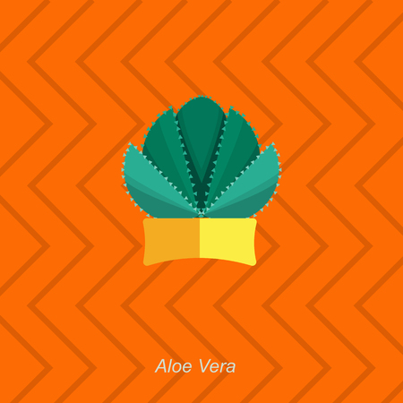 aloe vera plant: Illustration of houseplant, indoor and office plant in pot. Vector homeplant aloe vera in pot. Flat aloe vera, vector icon of aloe vera. Office plant in pot.