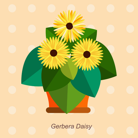 plant pot: Illustration of houseplant, indoor and office plant in pot. Vector plant  gerbera daisy in pot. Flat  gerbera daisy, vector icon of  gerbera daisy. Office plant in pot. Illustration