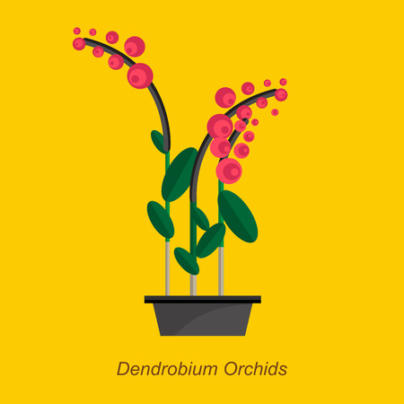 indoor garden: Illustration of houseplant, indoor and office plant in pot. Vector plant dendrobium orchids in pot. Flat dendrobium orchids, vector icon of dendrobium orchids. Office plant in pot.
