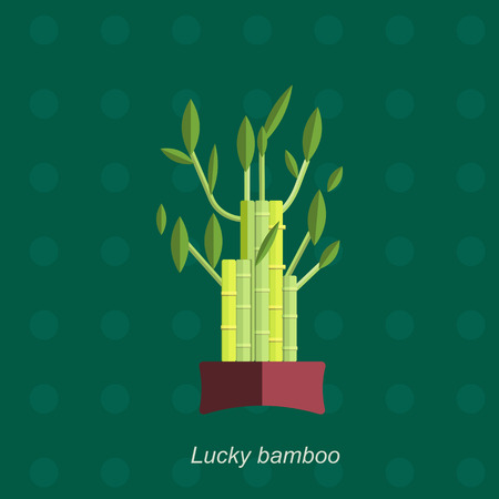 indoor garden: Illustration of houseplant, indoor and office plant in pot. Vector plant bamboo in pot. Flat bamboo, vector icon of bamboo. Office plant in pot.