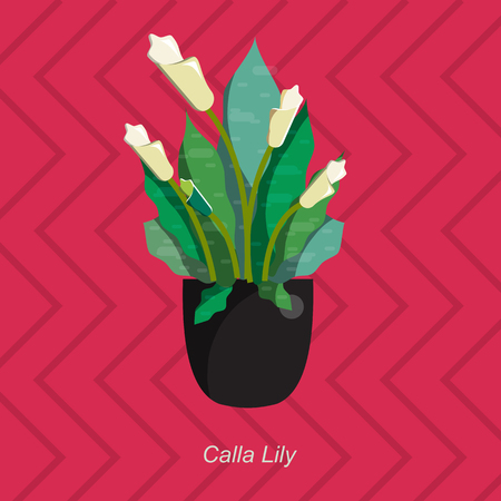 plant pot: Illustration of houseplant, indoor and office plant in pot. Vector plant calla lily in pot. Flat calla lily, vector icon of calla lily. Office plant in pot.