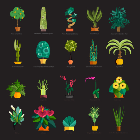 pot: Garden plants.Potted flowers in the garden illustration.Potted garden green plants. Greengouse garden plants and flowers.Planting greenery plants.Tropical garden plants.outdoor tree plants.