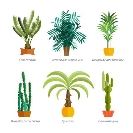 houseplant: Vector Set of indoor plants in pots. Illustration of floor trees homeplants for interior. Plants for home decoration. Potted tree homeplants with names. Big floor homeplants tree set.
