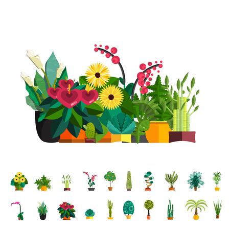 Big plants. Potted big houseplants. Tropical home plants. Big flowerpot with plants. Big palm tree in pot. Garden plants big set. Luxury interior isolated big plants in pot.