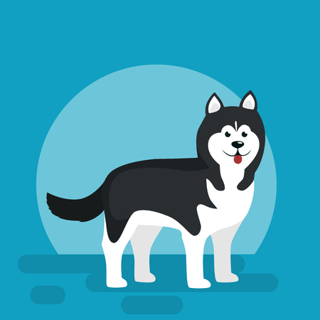 alaskan malamute: Isolated black and white young Husky, dog vector illustration on blue background Illustration