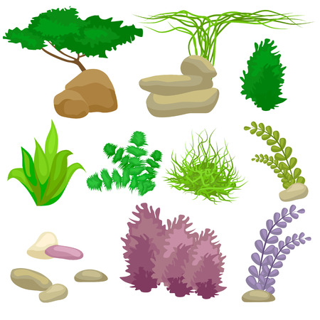 pebbles: Different kinds of algae and pebbles set isolated on white vector illustration
