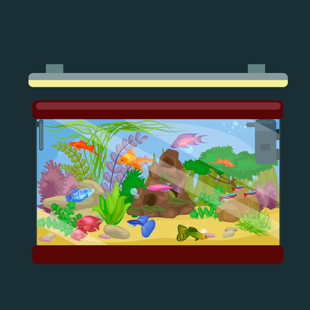 fish tank: Aquarium fish, seaweed underwater, tank isolated on dark background illustration